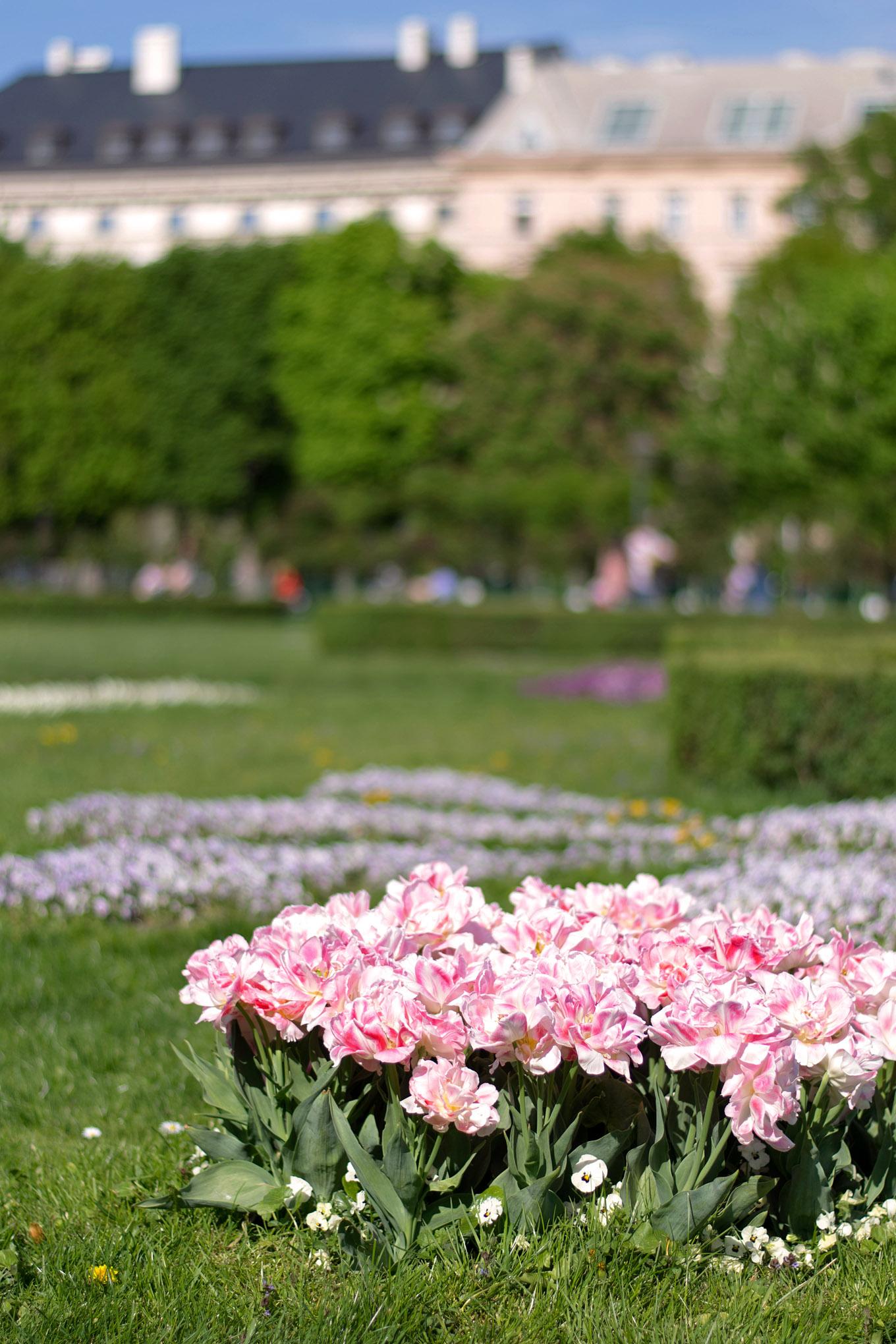 Fotografisch durch die Jahreszeiten Frühling in Wien 2