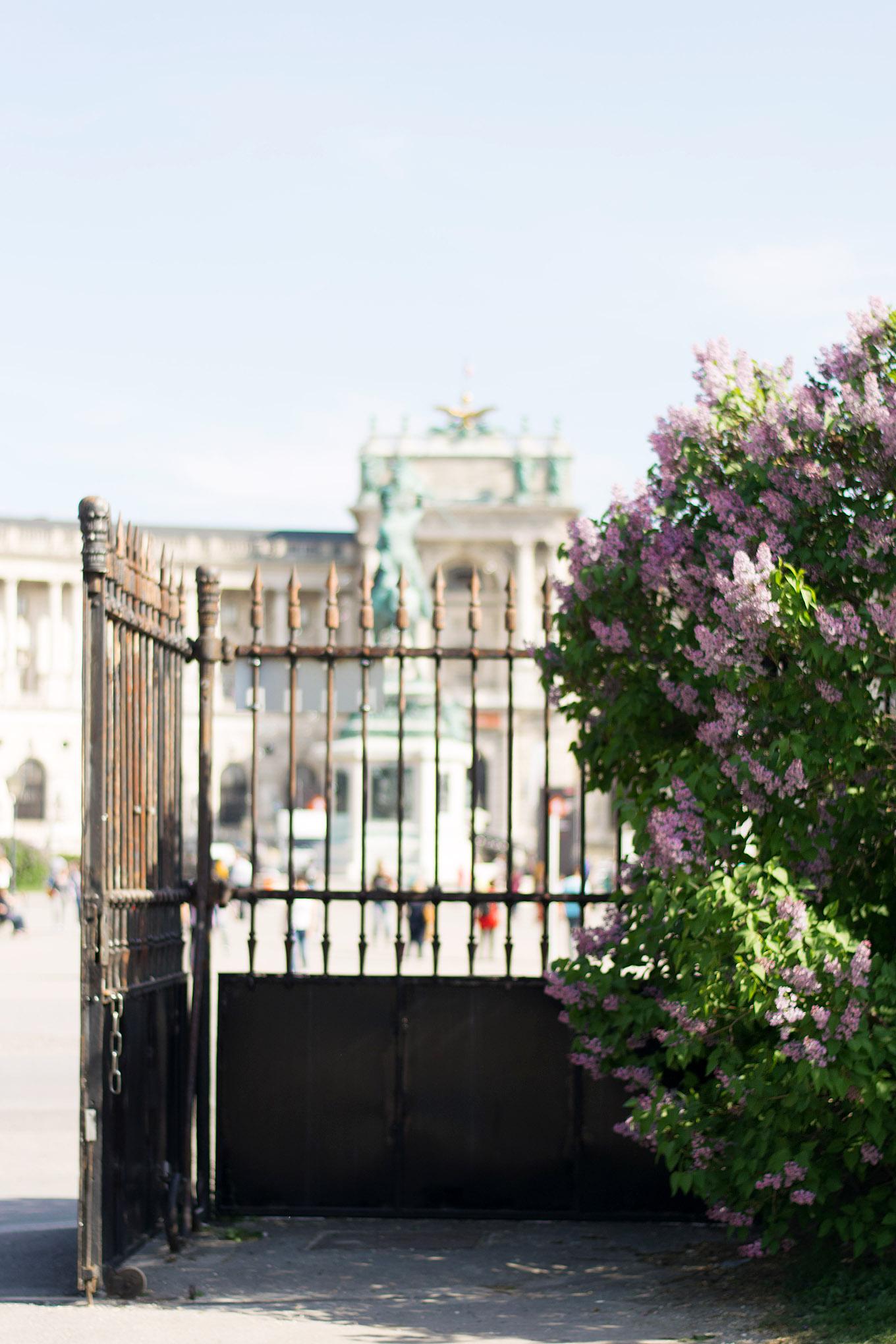 Fotografisch durch die Jahreszeiten Frühling in Wien 5